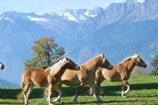 Horse Riding Hotels